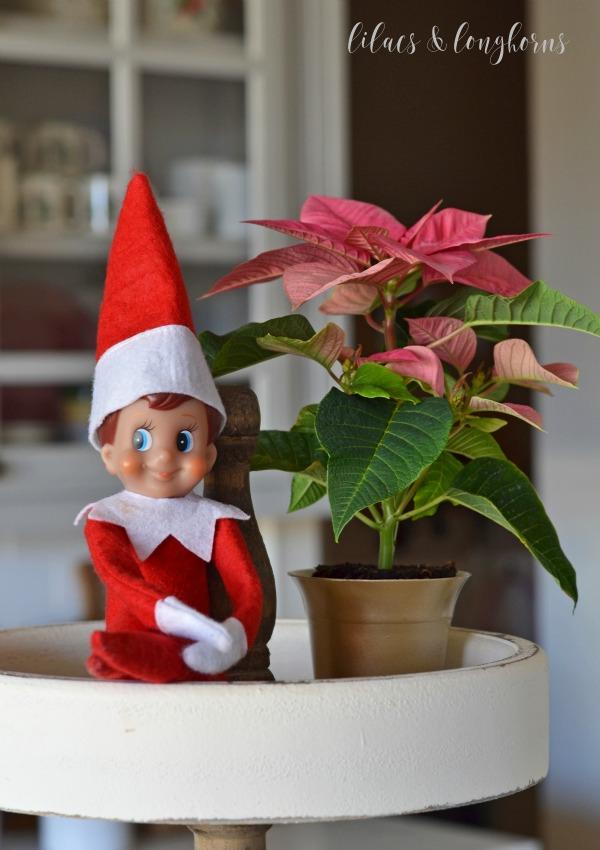 elf on the shelf and poinsettia