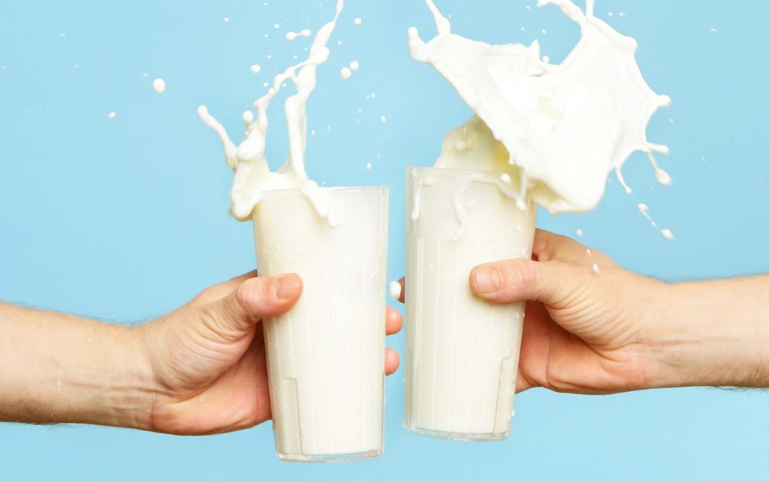 Should Humans Drink Cow Milk ?