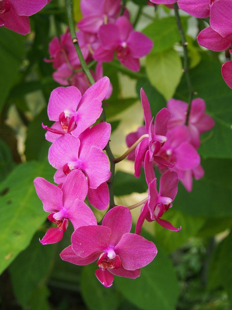 Orchidées - Jardins des Martels
