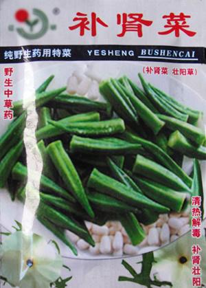 特菜種子-黃秋葵種子_補腎菜種子-壽光特菜種子_山東壽光麗林蔬菜種子公司