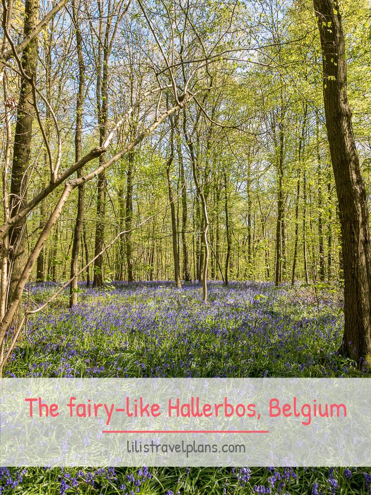 The fairy-like Hallerbos, Halle, Belgium
