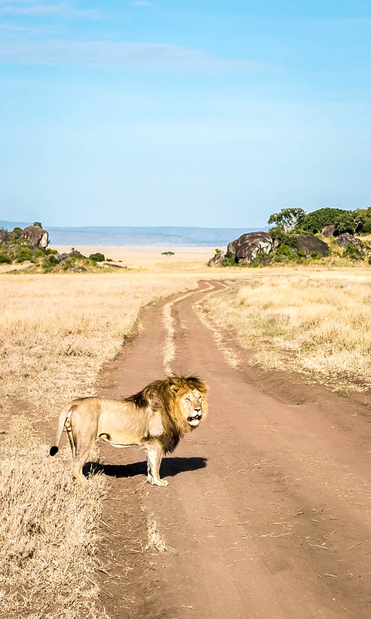 Photo guide - A safari in Tanzania - Serengeti National Park