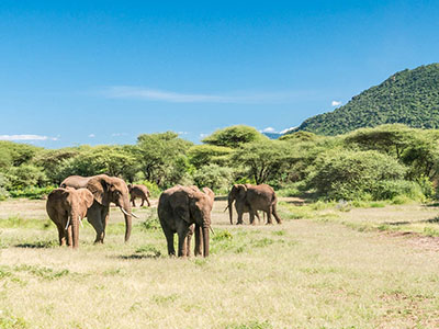 IN PHOTOS – A safari in Lake Manyara National Park, Tanzania