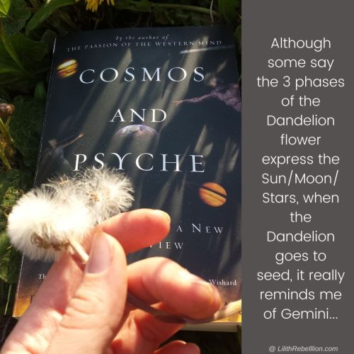 Cosmos and Psyche book on grass with hand above holding a dandelion that has gone to seed with the caption: althought some say the 3 phases of the dandelion flower express the sun/moon/stars, when the dandelion goes to seed it really reminds me of gemini...
