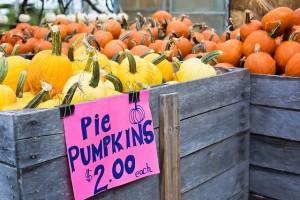 pumpkins-936517_640[1]