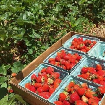 Berry Fruit Farm Livermore