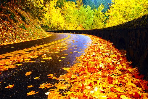 Autumn Road, Columbia Gorge, Oregon