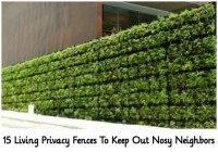 15 Living Privacy Fences To Keep Out Nosy Neighbors - Lil ...