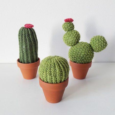 cactus lilofil 2