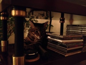 Uncropped original of ABMP3's second banner photo. Timmyhead, about five months old here, ponders analog vs. digital and wishes he could lay on the turntable (one level up on the rack).