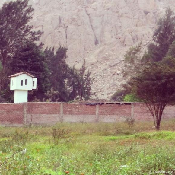 Un muro delineando un predio con su casita de vigilencia. En cambio, podría haber un muro hecho de vegetación nativa con una casita de aves. Tomada por Marina Vella en Cieneguilla.