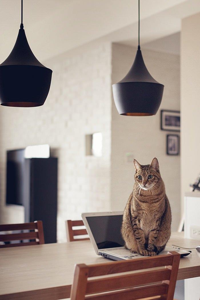 Uma casa perfeita para gatos  limaonagua