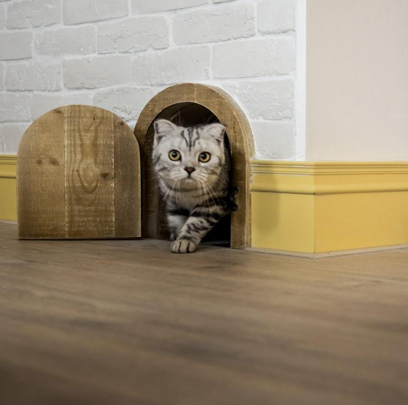 Apartamento moderno projetado para um casal e seus gatos