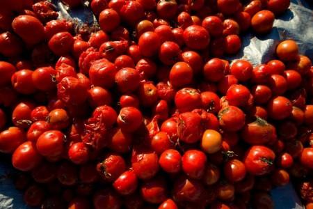 tomatoesforsale