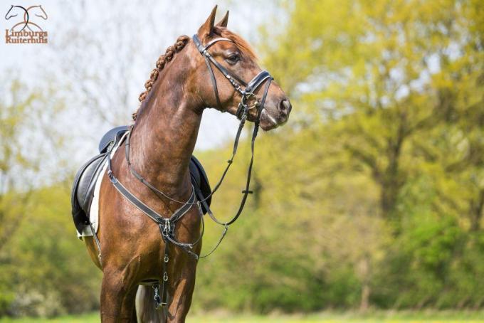 Profi-Rider Borsttuig Zwart