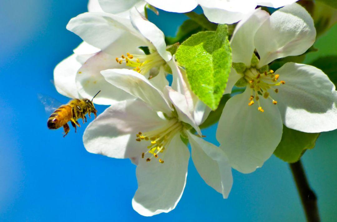 beefriendly-fleur