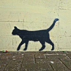 the dead cat bounce analogy