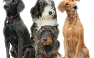 Going to the dogs can result in health and happiness