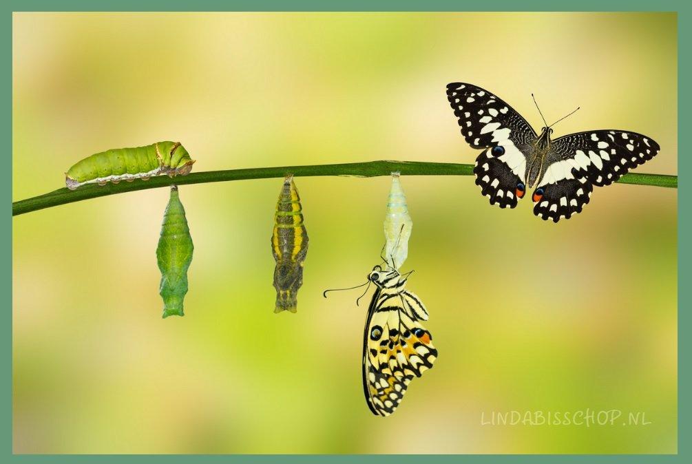transformatief intuitief coaching