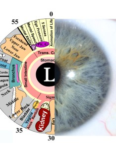 Iridology eye and chart copy also assessments gold coast for weight loss  digestive system rh lindacairns