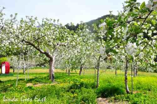 apple4blog