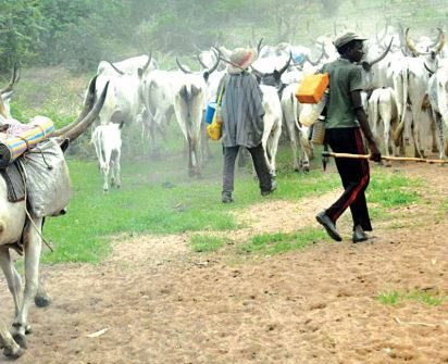 Fulani herdsmen stab each other to steal cows In Imo State