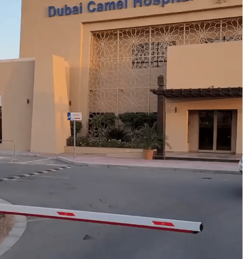 Dino Melaye expresses surprise at seeing a hospital for camels in Dubai