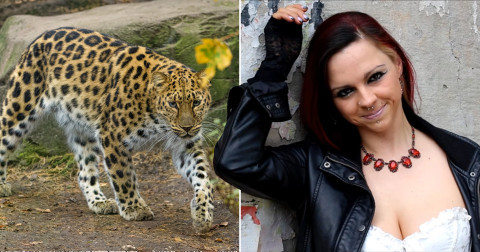Model mauled by leopard after getting into its cage during photoshoot that went horribly wrong