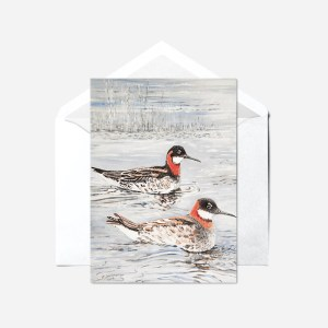 Red-necked Phalaropes