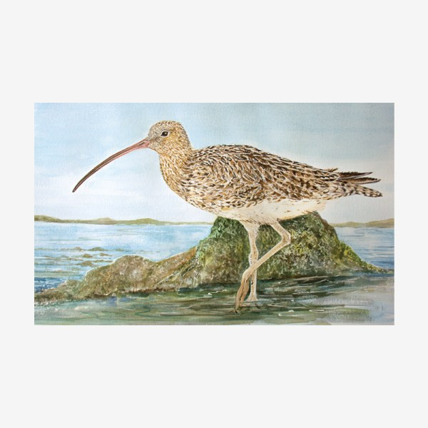 Curlew Painting
