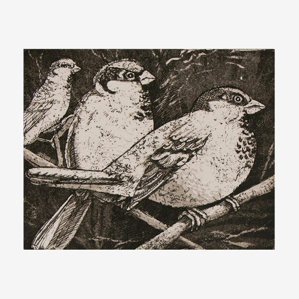 Sparrows - Etching