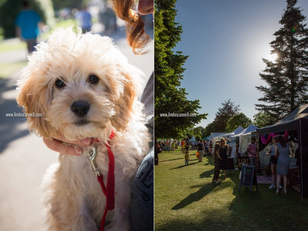 Doggie member of the Camouflage Festival team | Crowds at Art in the Park 2016 | Leamington Spa