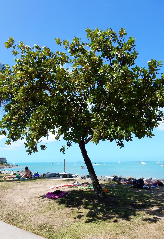 Airlie Beach Queensland Australië Australia