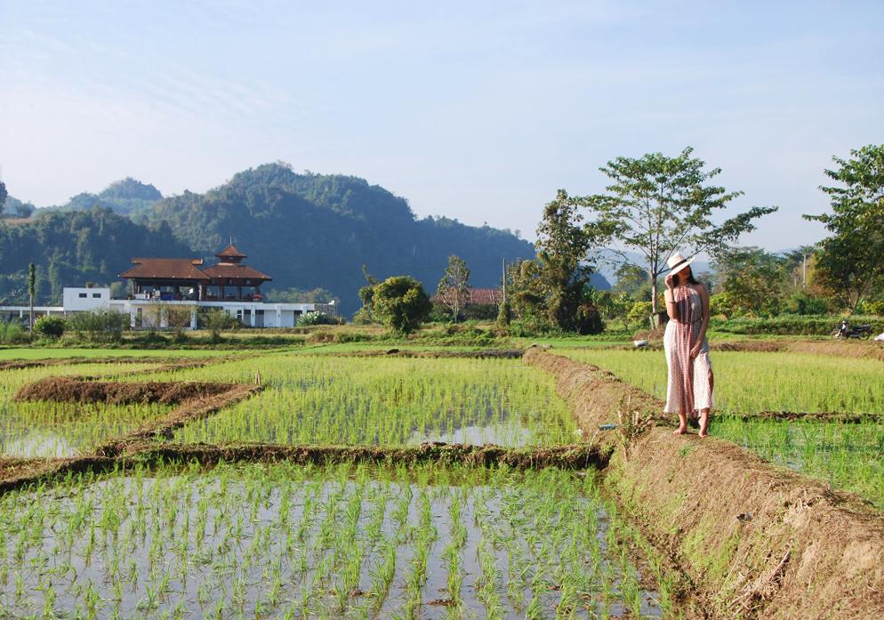 Rijstvelden Chiang Rai Thailand