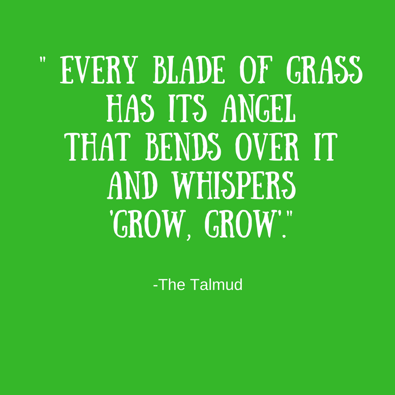 """Feng Shui power of nature: """"Every blade of grass has its angel that whispers grow grow."""""""