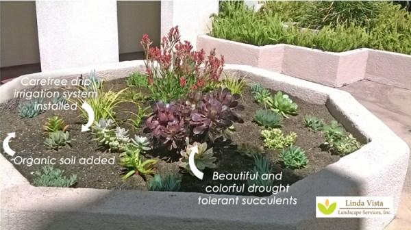 drought tolerant plants los