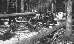 1911, skogsavverkning