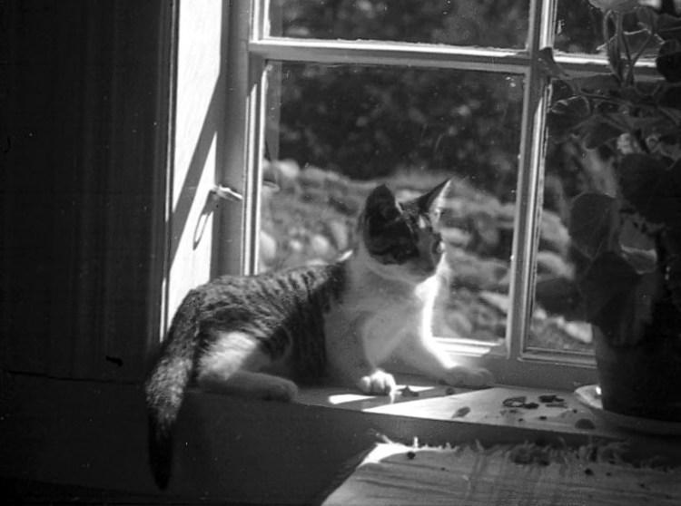 Katt fotograferad 1940