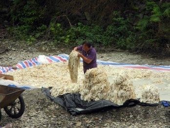 Den färdiga barken lastas och fraktas till kokeriet...