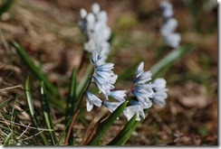 20120331_springtime_6171