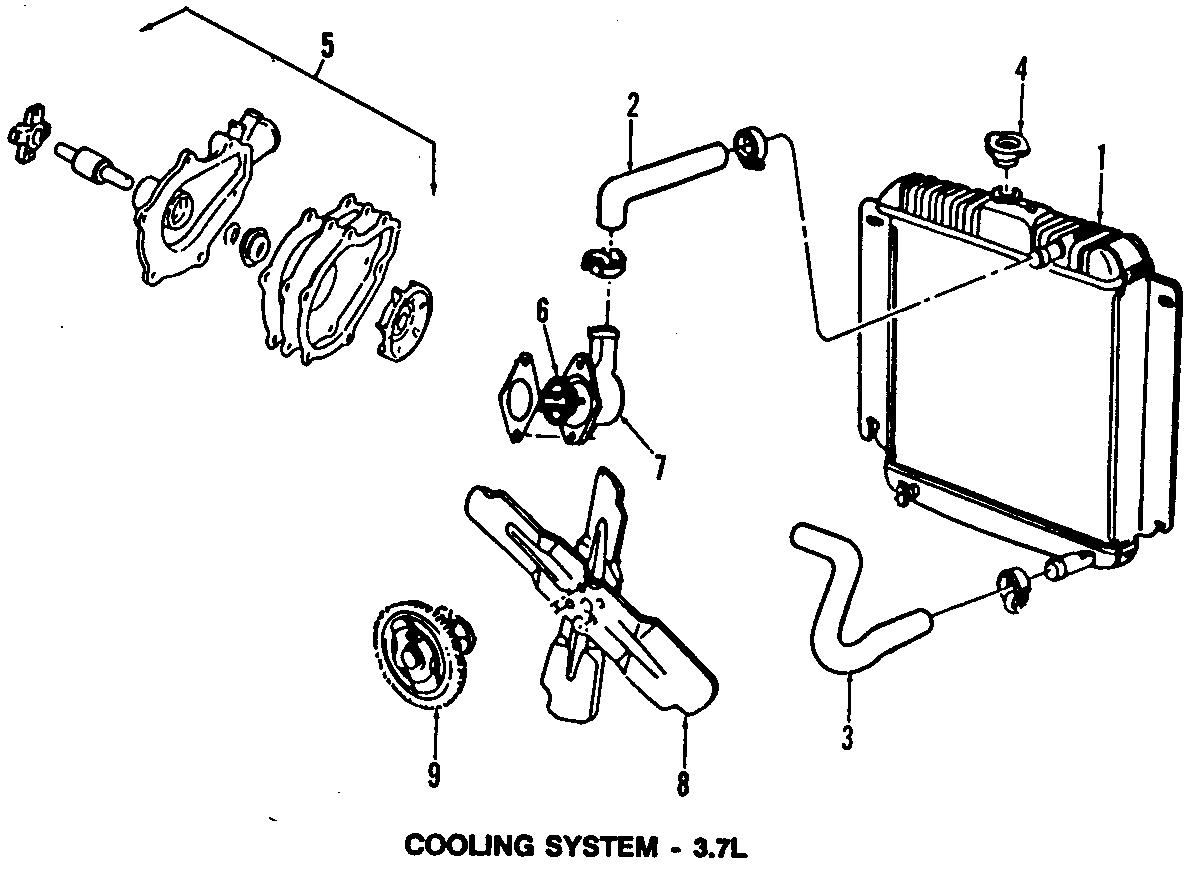 Dodge D250 Lower hose. 6 CYLINDER, w/AC. All Models