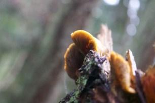 010518 Anacortes Forest Lands-70