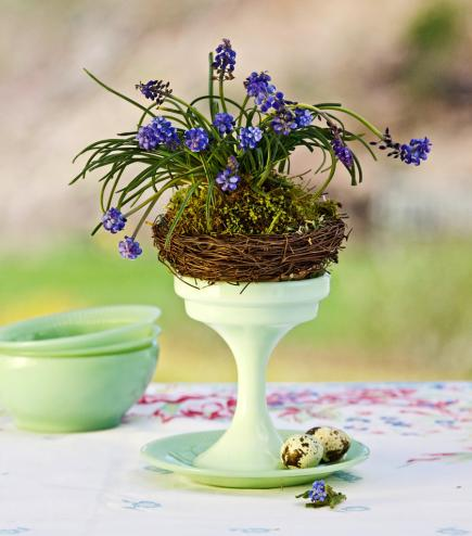 beautiful easter and spring centerpiece hyacinth