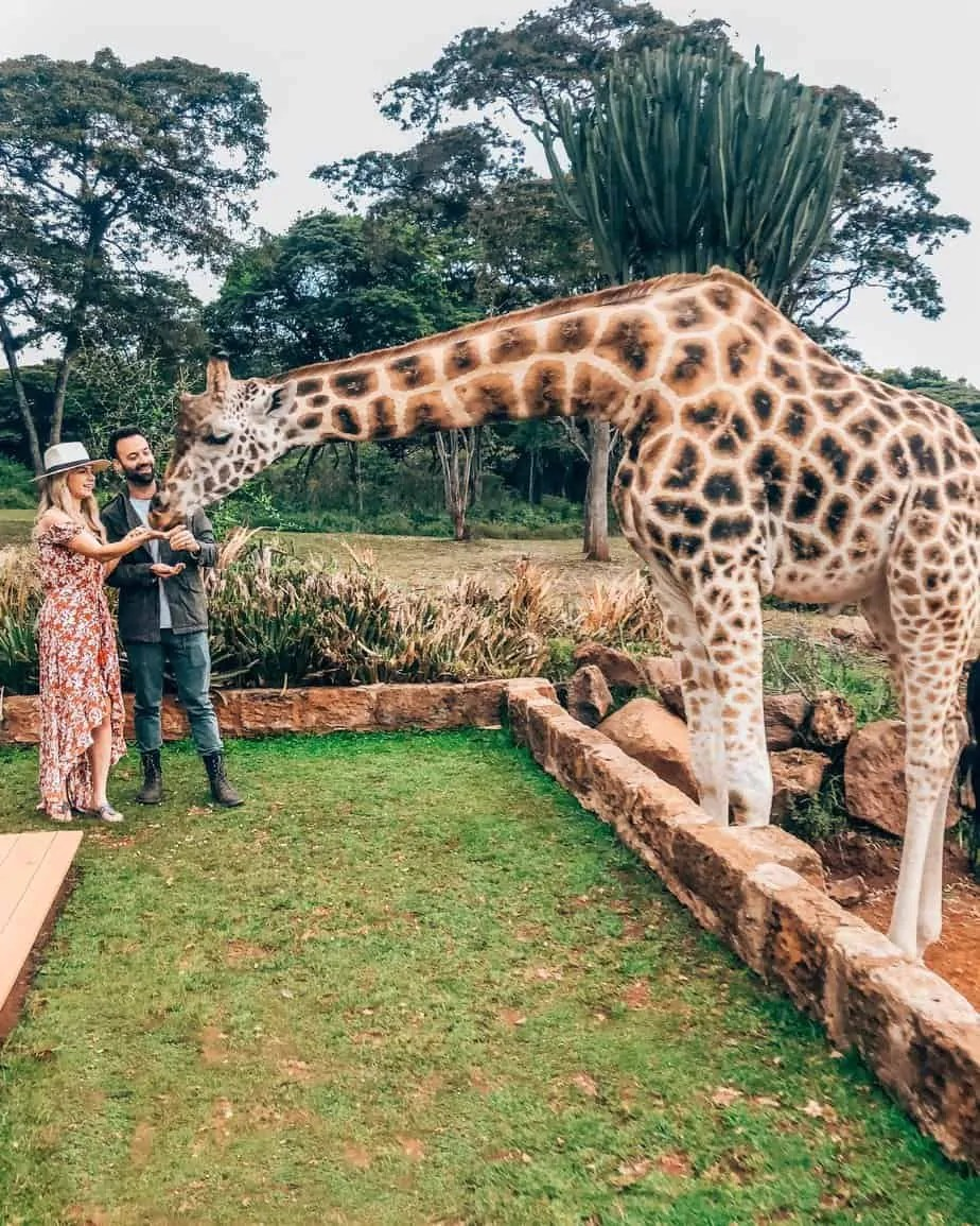 Everything You Need to Know About Planning a Safari