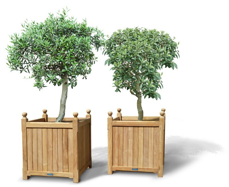 Pair of Extra Large Versailles Planters  Lindsey Teak