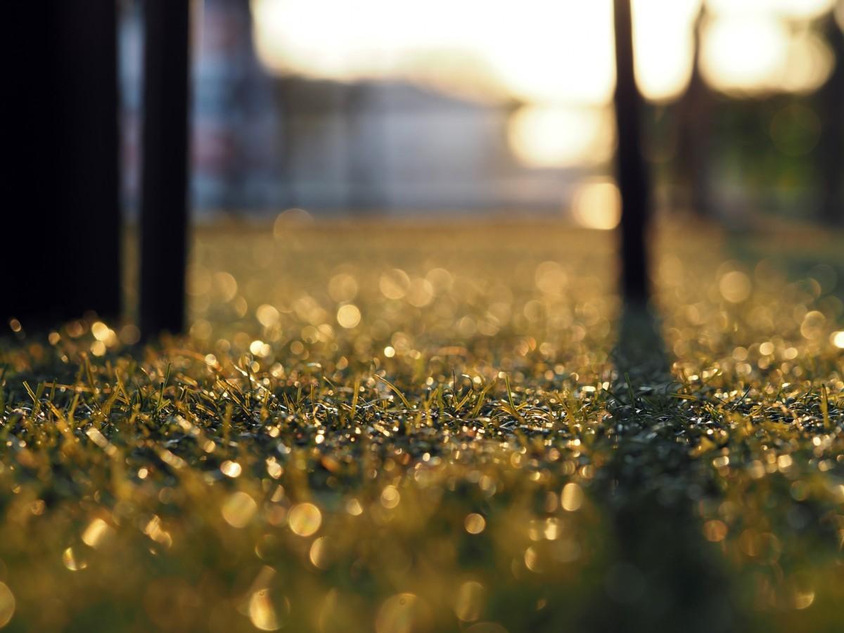 artificial-grass-1170472_1920