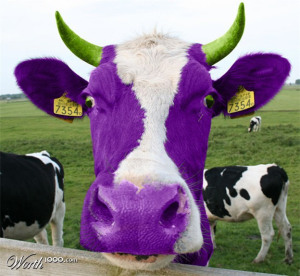 purple-cow-nancy-cooklin