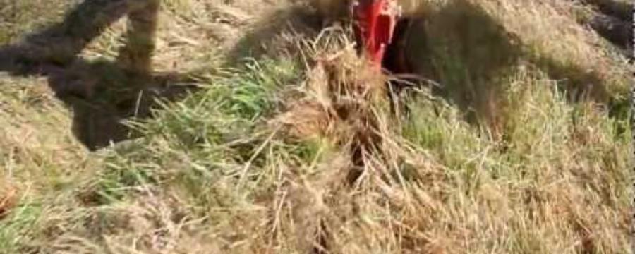 Demo en Son Barrina. Mallorca del cultivador subterraneo Yeomans