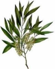 La Aromaterapia con aceites esenciales