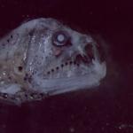 Ψάρι-τέρας 2